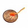 B-Y Baits Bloodworm- FL Orange