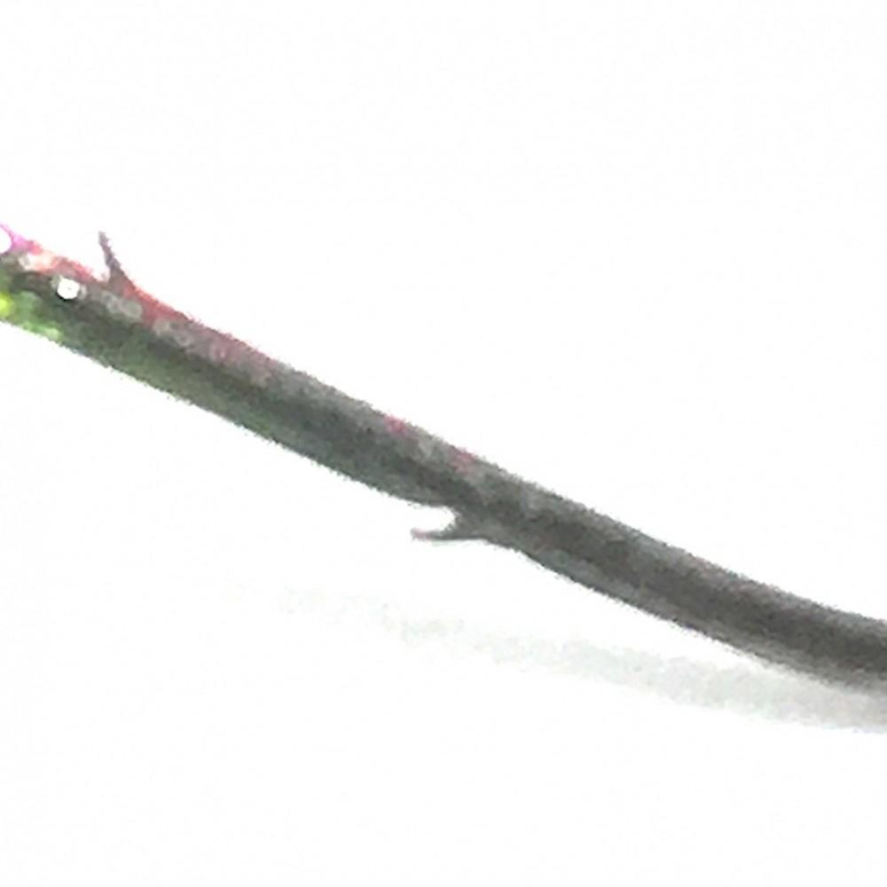 Close Up on Micro Barbs