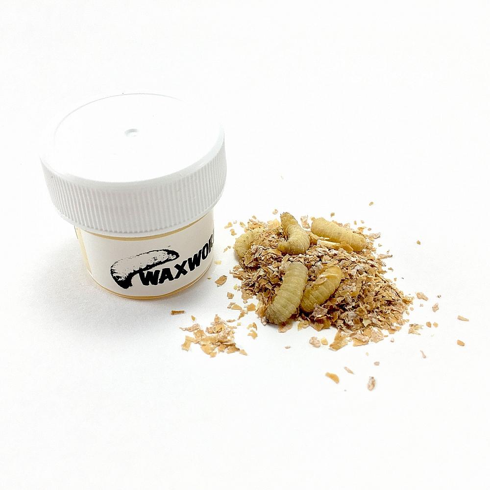 Waxworm Paste