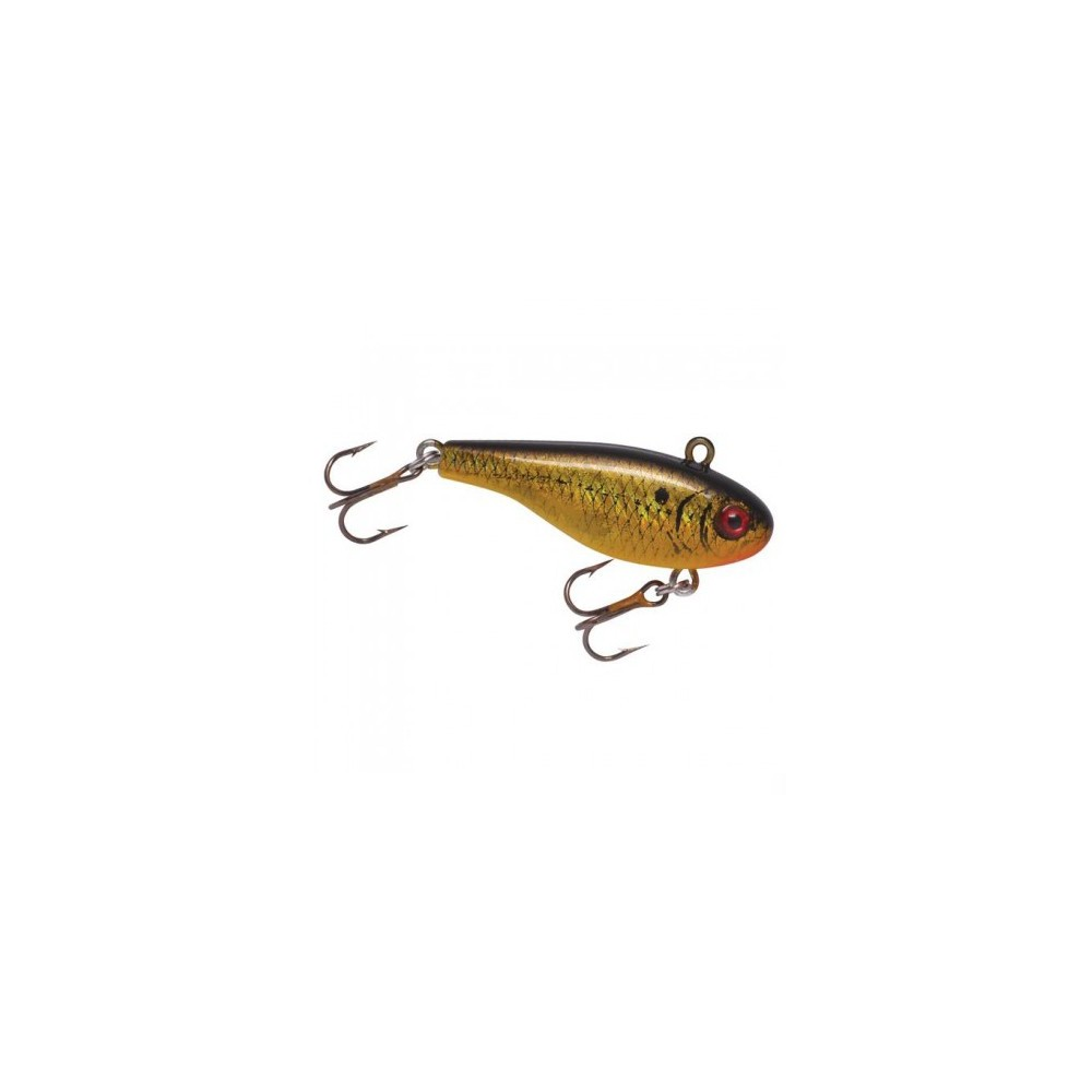 Lindy Darter- Golden Shiner
