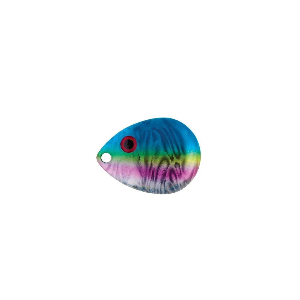 Rainbow Dace
