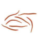 Berkley Gulp Alive Angle Worm