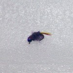 Tungsten Ice Flies Scud Rainbow